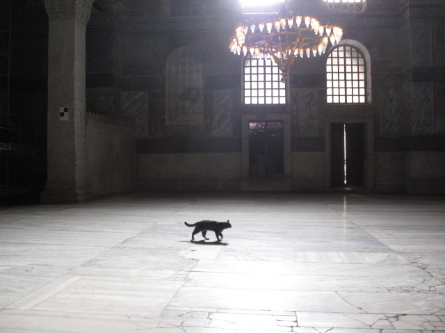 Cat in Mosque