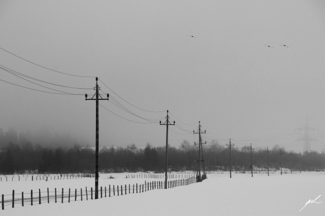 black and white, nature, cold, winter, snow, birds